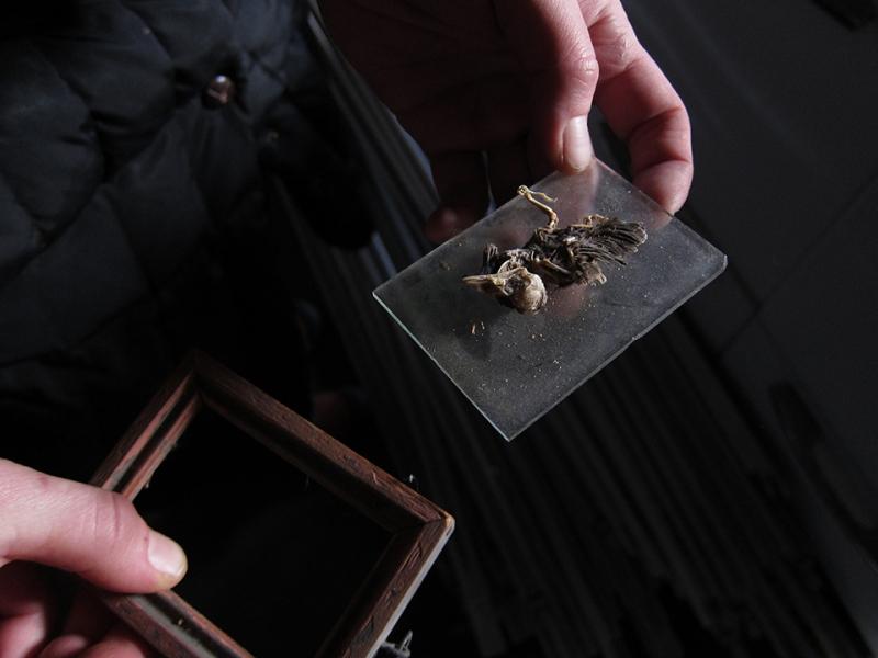 dead bird on glass