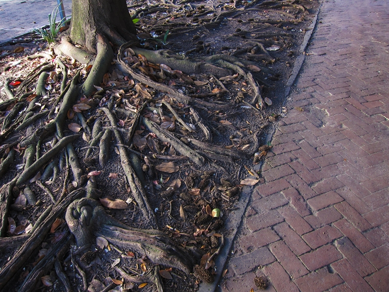 roots and bricks