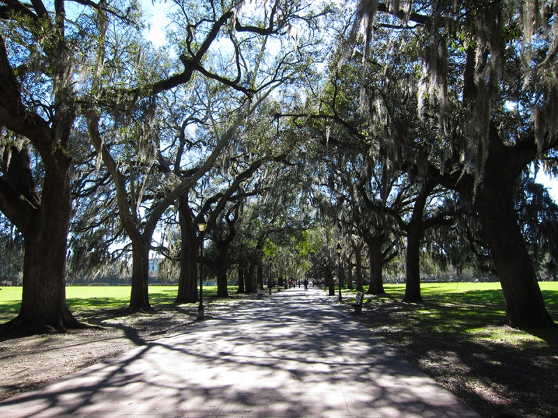 Savannah shady path