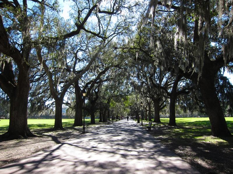 Savannah shady path