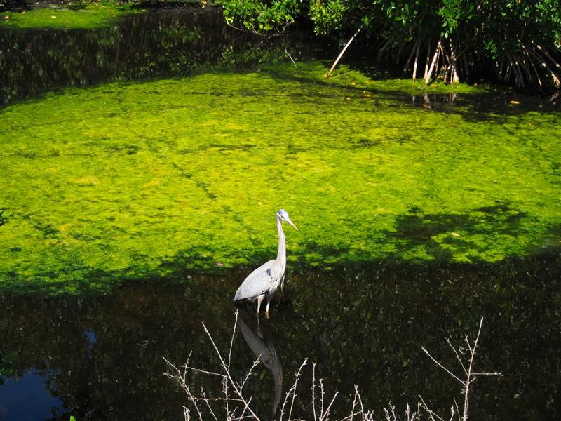 bird and green
