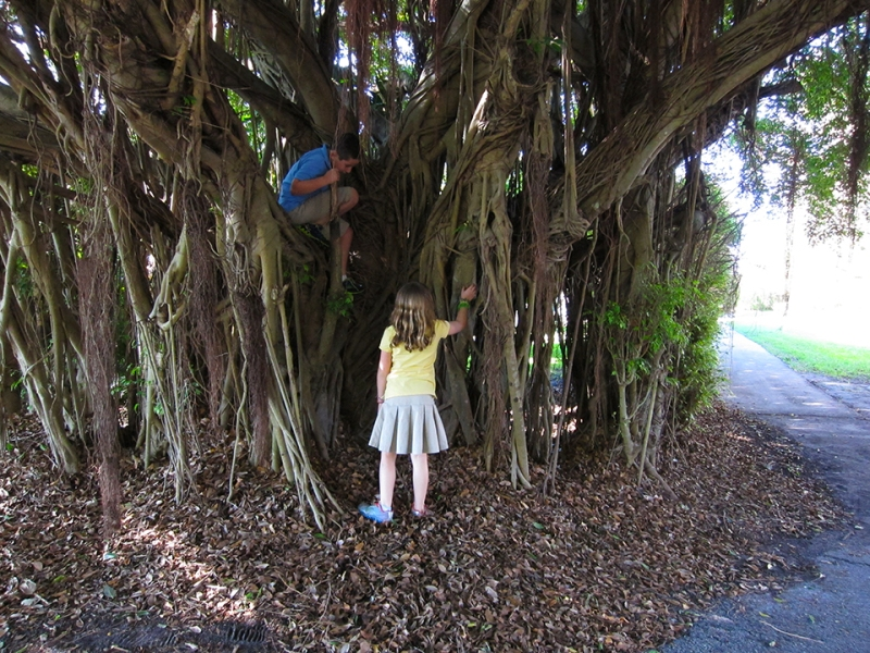 max shayna and the tree