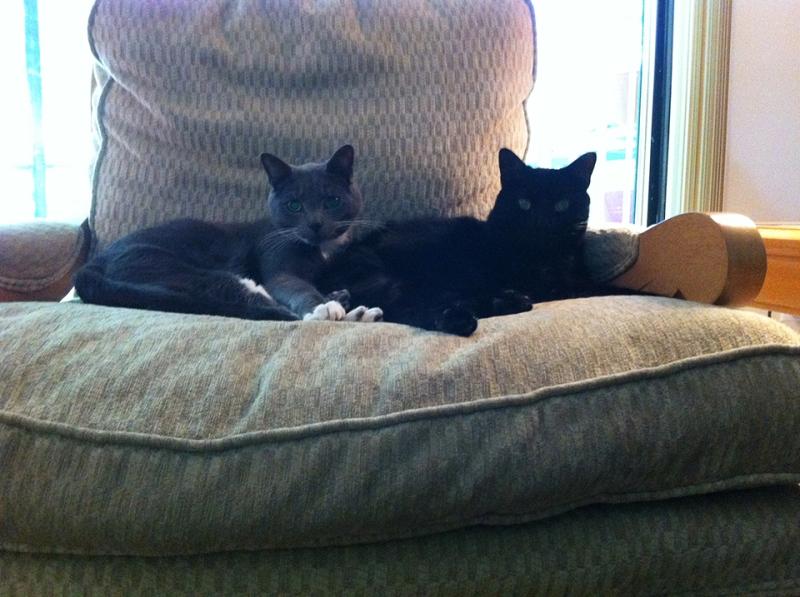 morning and night kitties