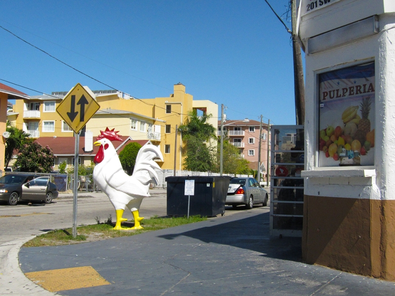 rooster crossing