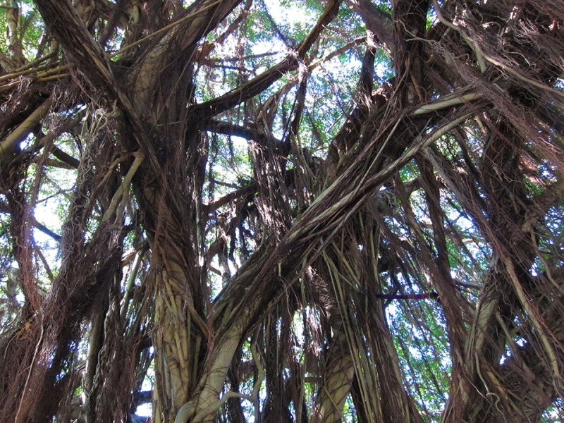 root tree 2