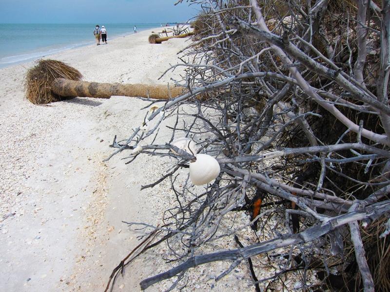 shell tree 2