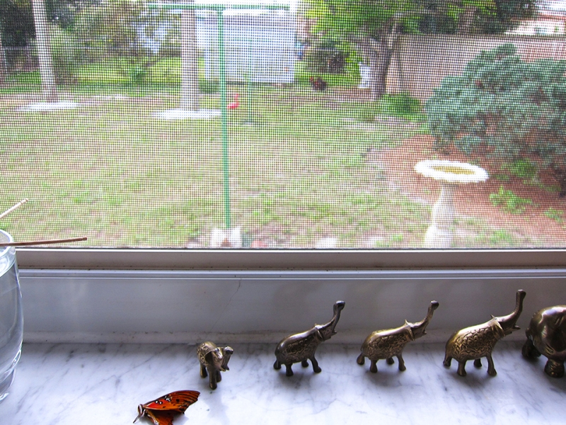 tiny elephants