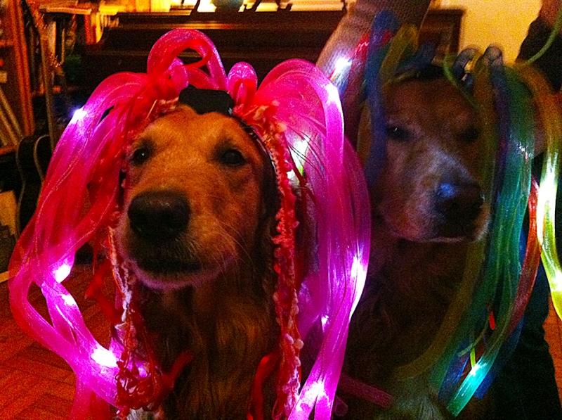 blinky pups