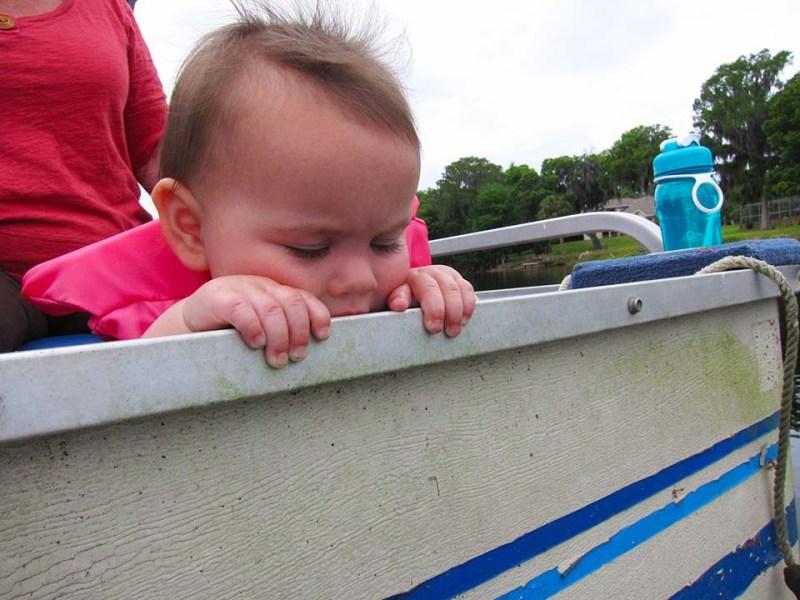 boat eater