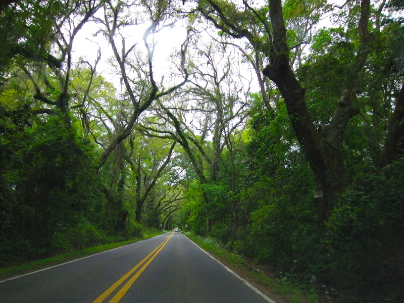 dark moss road