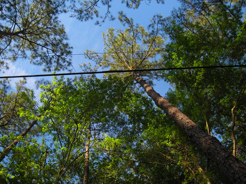 treetops and sky 2