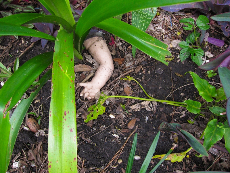 a hand in the garden