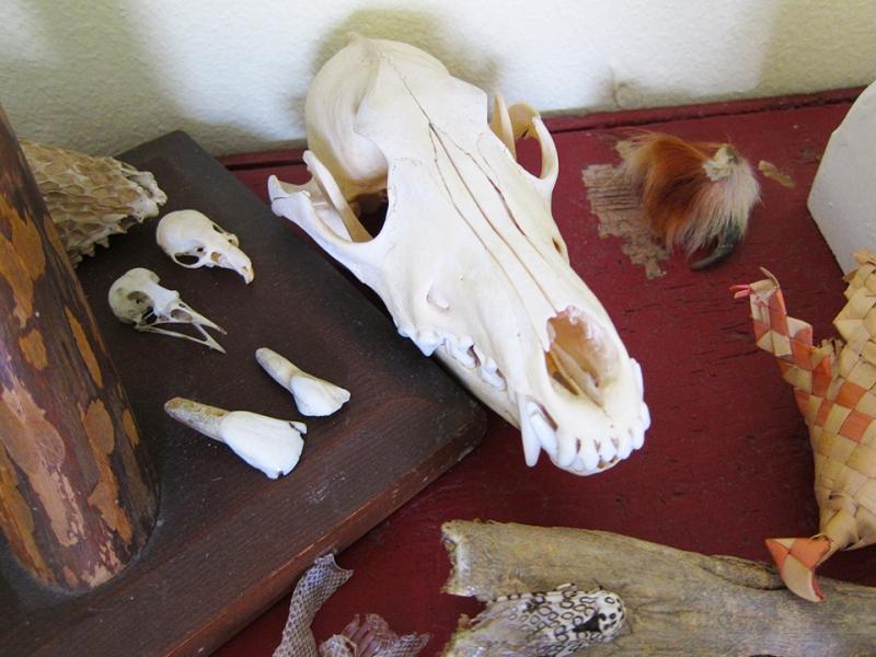 skulls etc