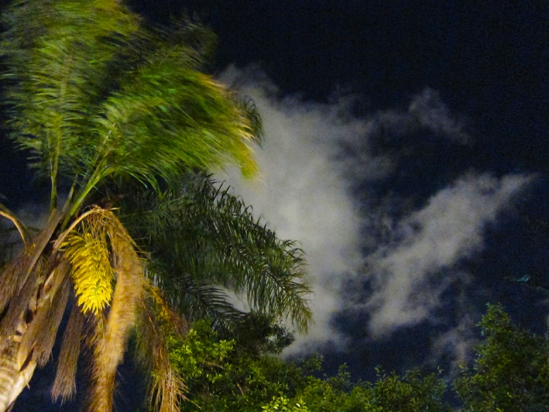 windy palm night