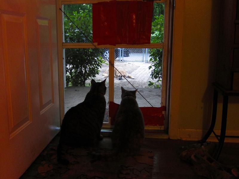 jealous cats
