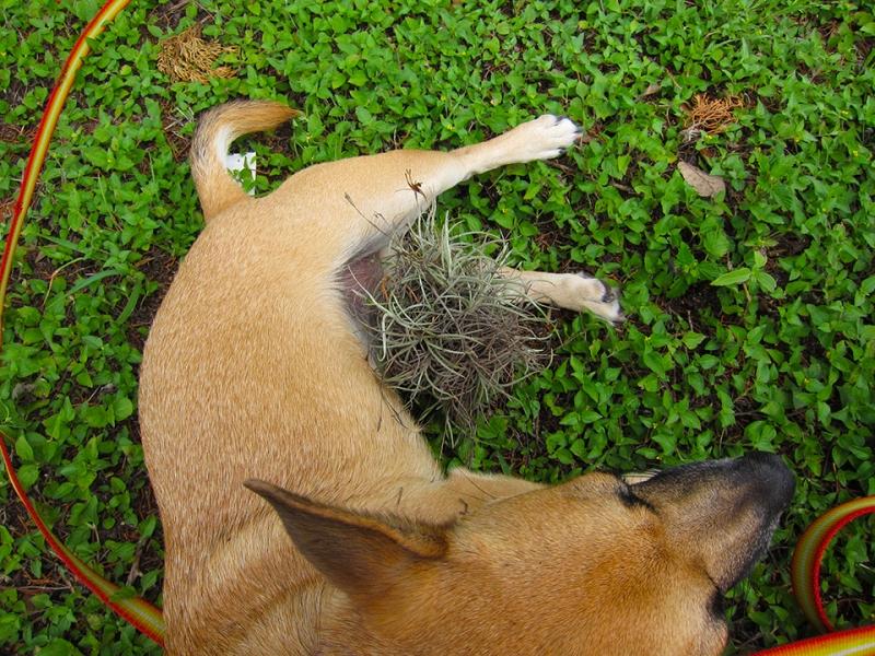 hair plant
