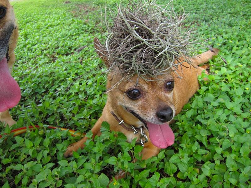 hair plant2