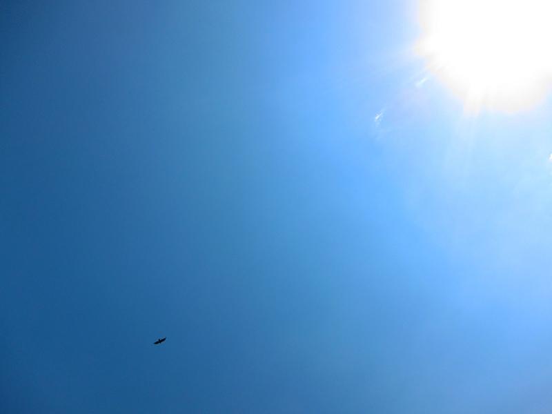 sky bird sun