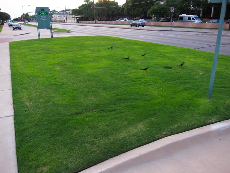 open birds